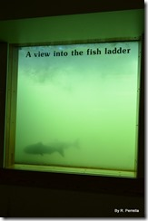 Underwater fish ladder view
