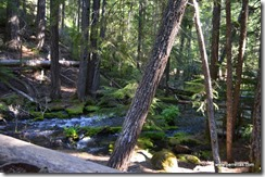 Clearwater Falls trail