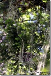 Net Lichens