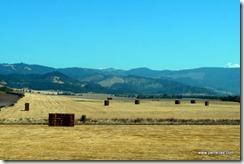 Roseburg hay fields