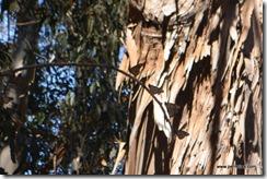 Monarchs on a twig