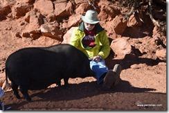 Piggy petting