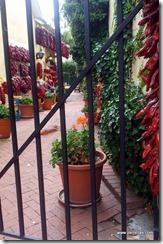 Chili Alley
