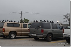 The Birds at Walmart