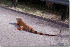 Florida critter