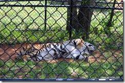 Gunther resting