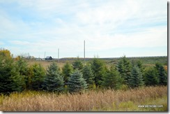 Farm land and Christmas trees