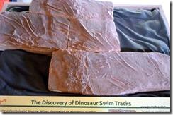 Dino swim tracks