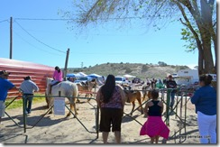 Pony rides at the Market