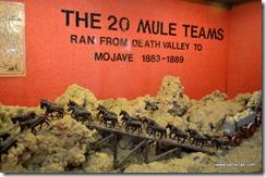 20 Mule Teams
