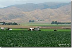 Crop workers