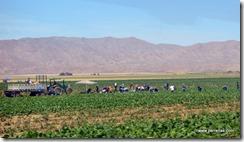 Field workers (2)