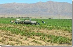Field workers (3)