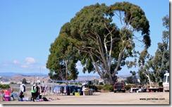 Salinas Elks Flea Market