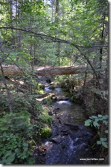 Stream in the Nelder Grove Historic area
