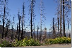 Wildfire damage
