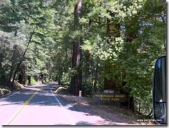 Entering Richardson Grove State Park