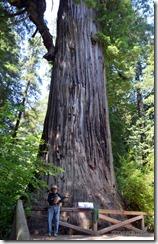 John KatieBug and the Big Tree