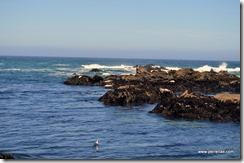 Noyo Bay seals