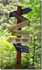 Sign by the Big Tree