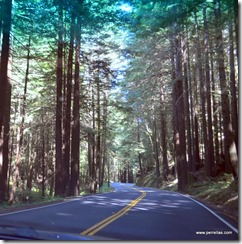 Winding through the Redwoods