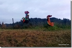 Tillamook chicken farm